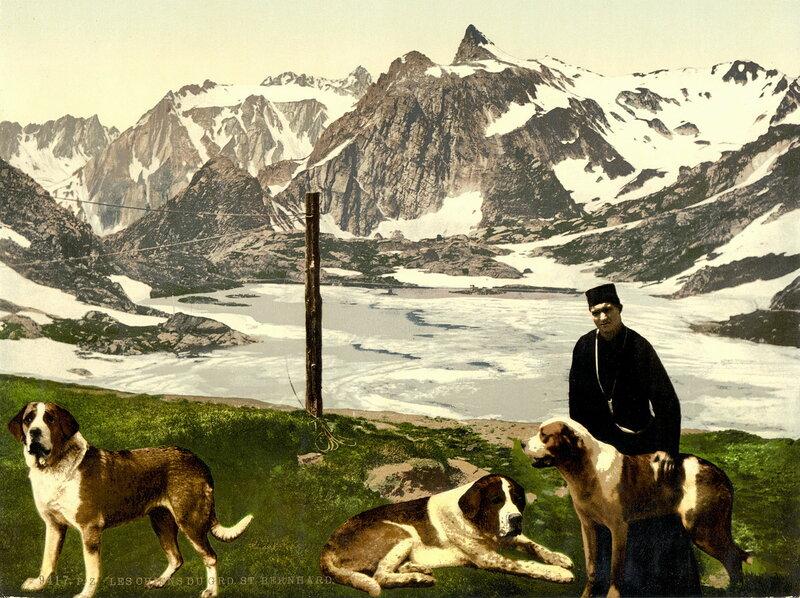 31. Сенбернары на фоне гор