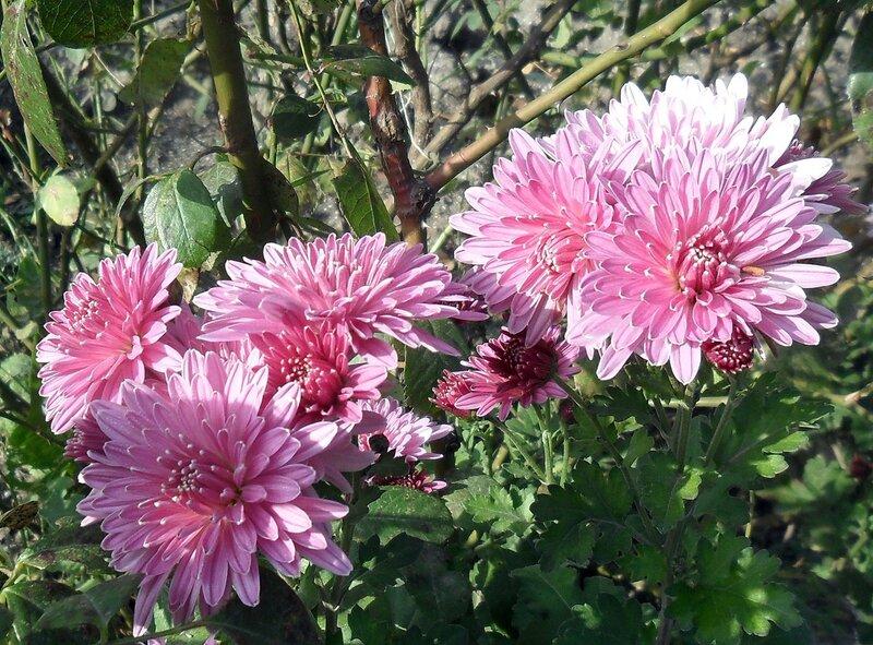 Цветы, осень 2011