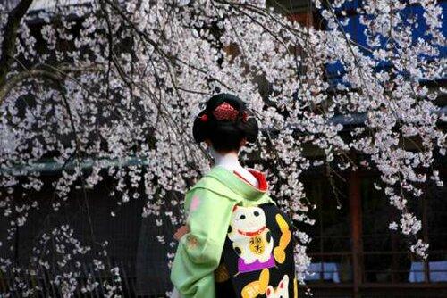 Период цветения сакуры короток.