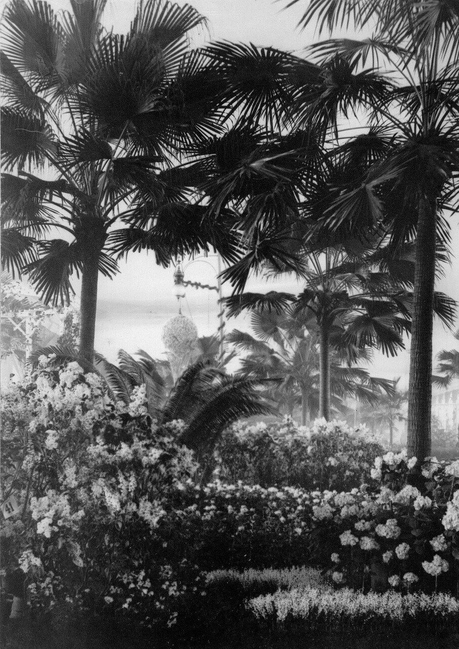 02. Пальмы в оранжерее. 1908
