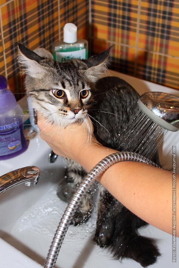 как моют котят