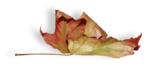 natali_design_dream_leaf2-sh1.png