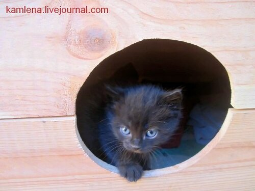 котенок, кошатник