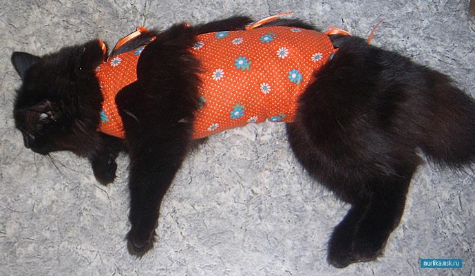 Стоит стерилизовать кошку фото