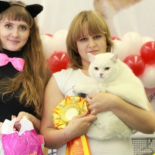 Best Household Pet - 174 Тима (M) PET w 62 Вл. Жилинская Д.,