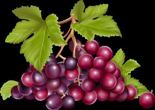 виноград (8).png