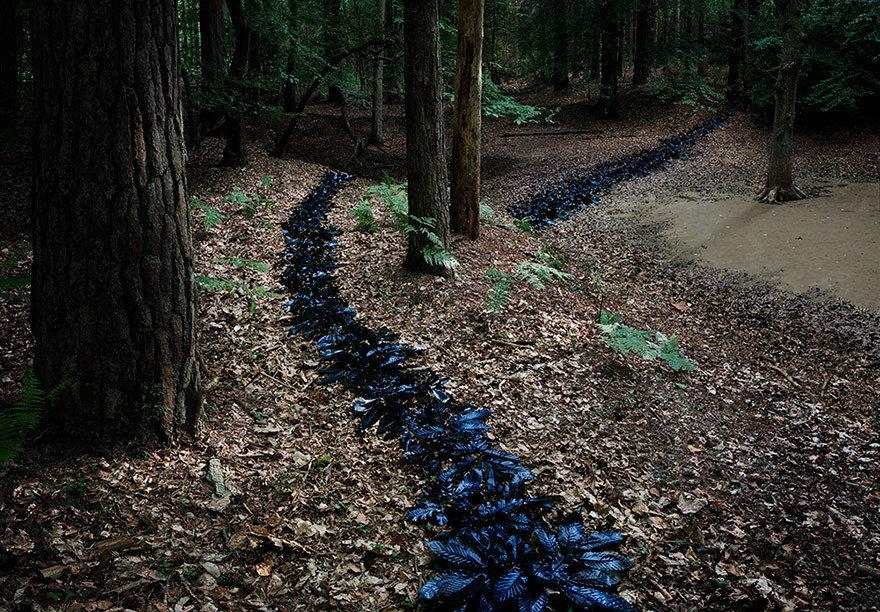Into the woods, Ellie Davies.jpg