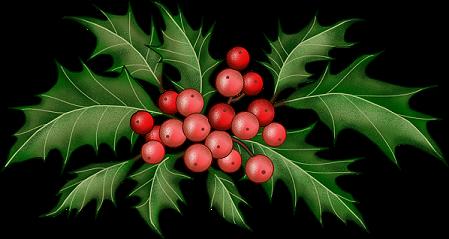 Branches de houx no l - Decoration de noel avec du houx ...