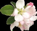 NLD Pink Flower (3).png
