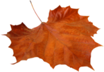 florju_autumnontheway_elmt (9).png