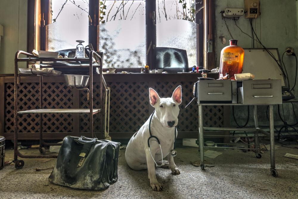 Собака исследует заброшенные места