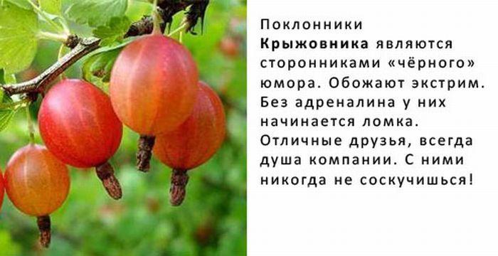 http://img-fotki.yandex.ru/get/4421/130422193.8f/0_6fb94_cc16fe64_orig