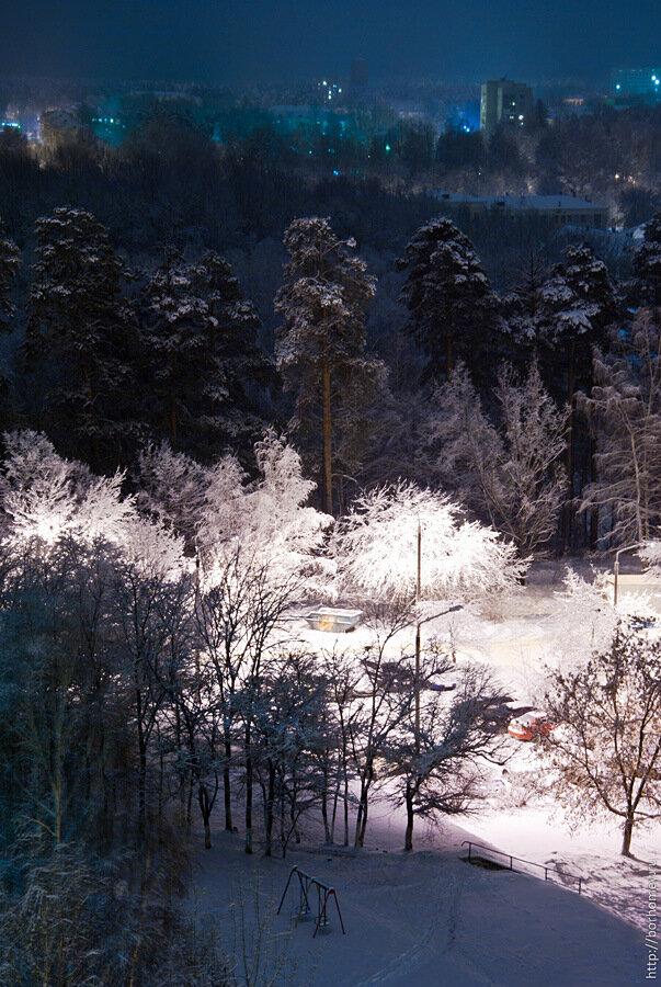 деревья после снегопада