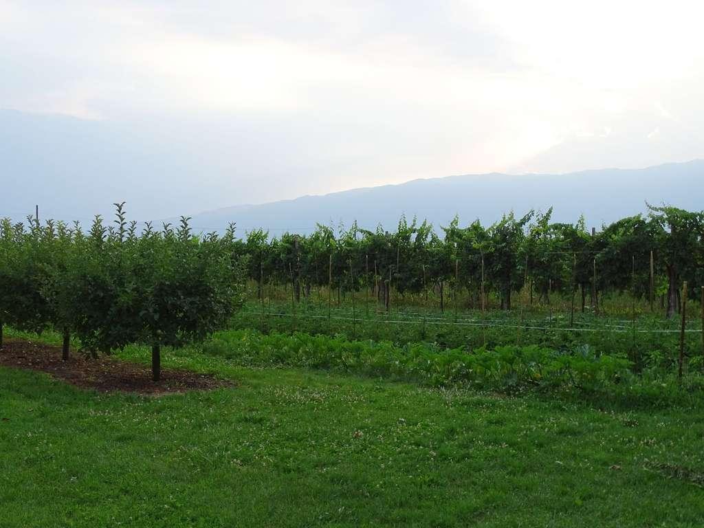 Фриули и немного Венето, июль 2015