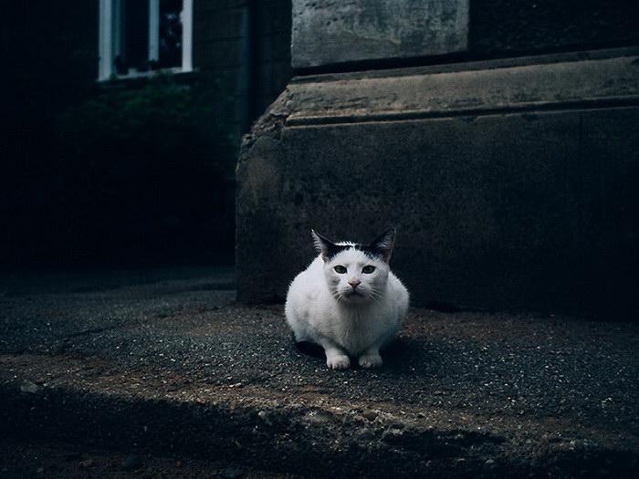 Забавные кошки, живущие сами по себе. Фотограф Хажду Тамас (Hajdu Tamas)