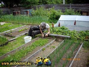 огородная жизнь