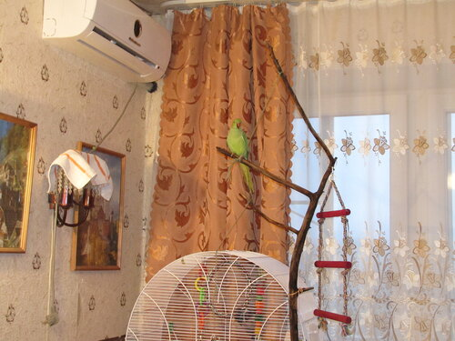 Веточная конструкция для попугая