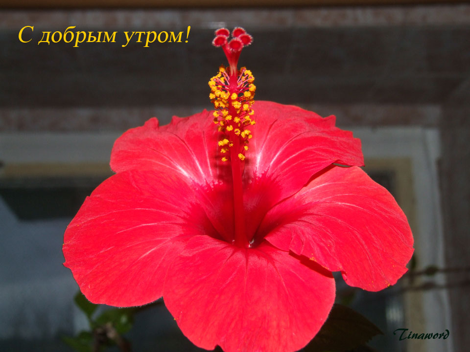 цветок-1.jpg