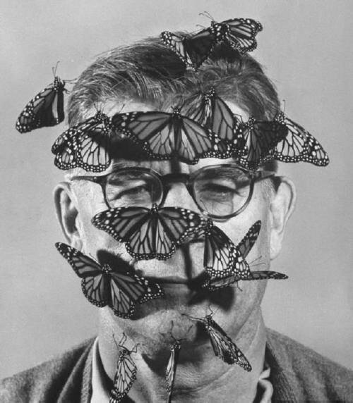 Carl A. Anderson with monarch butterflies on his face. Life 1954 by John Dominis