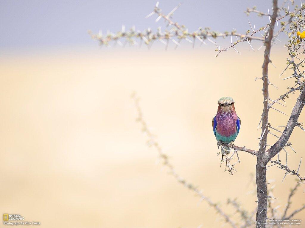 Автор: Петкун Евгений, блог Евгения Владимировича, фото, фотография: Птица-гоп