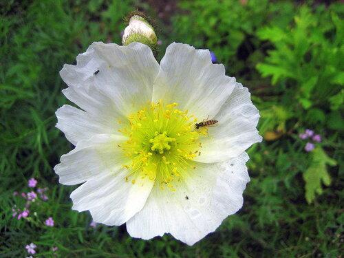 У цветочка гость