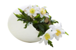 MR_Wood Anemones in Duck Egg.png