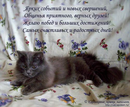 Прикольные поздравленья о кошках 312