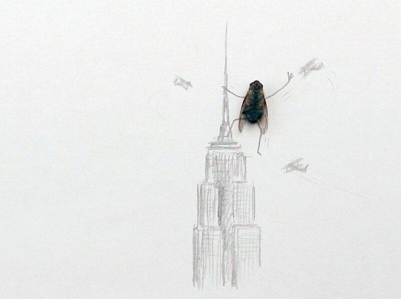 Видео днем, приколы картинки с мухами