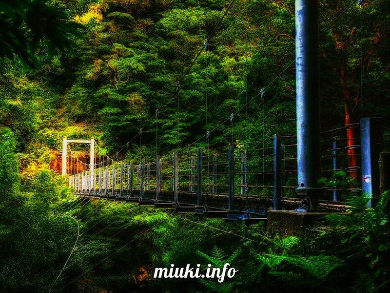 Остров Якусима (Yakushima)