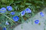 395 Синие цветы