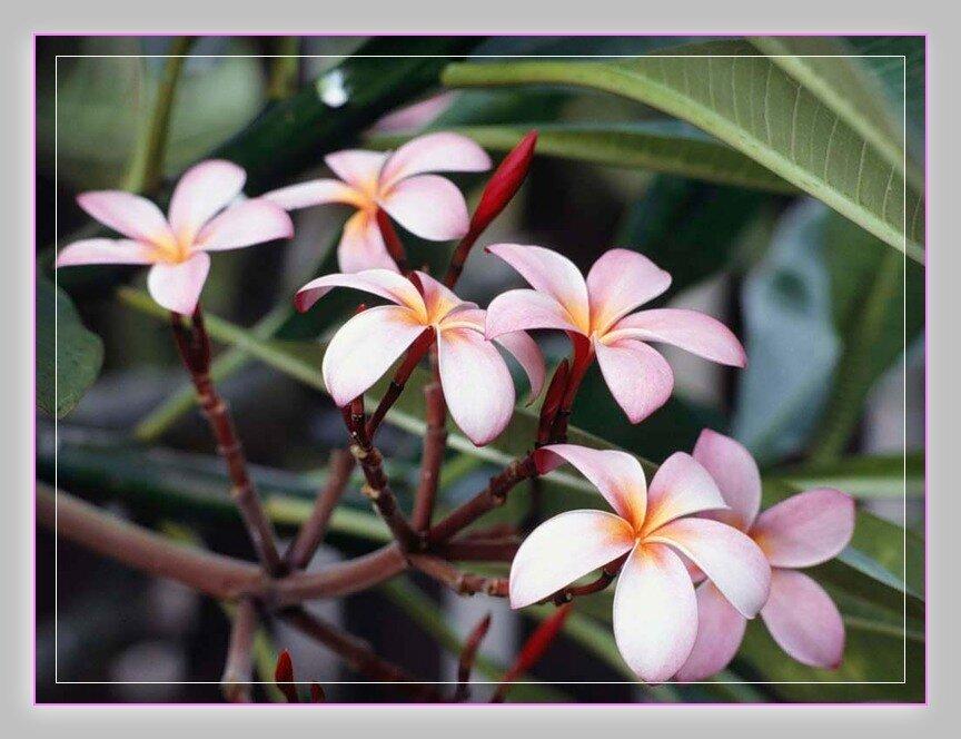 Цветы любят нас без слов и дарят волшебство форм, красок, запахов, и они могут улыбаться и грустить, как и мы!