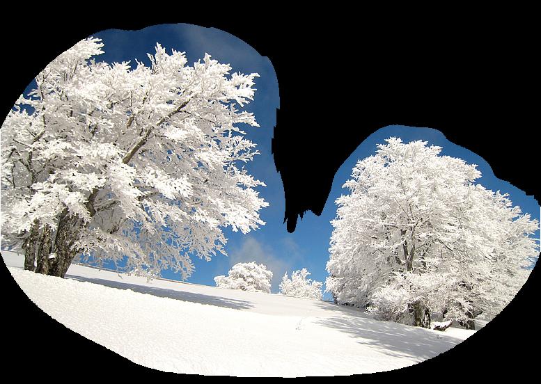 зимние картинки пнг на прозрачном фоне