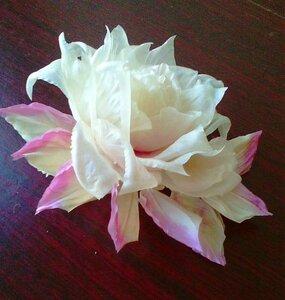 Роза - царица цветов 3 - Страница 5 0_1196bd_8b0ea4df_M