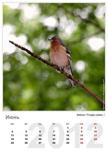 Календарь «Птицы 2012» Июнь - Зяблик / Fringilla coelebs (самец)