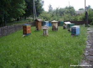 Институт пчеловодства имени П. И. Прокоповича