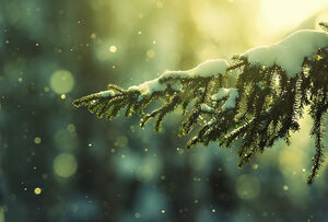 еловый лесной аромат
