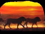 les lions.png
