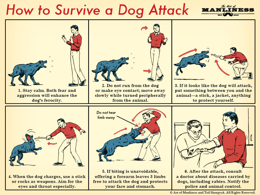 How to Survive a Dog Attack.jpg