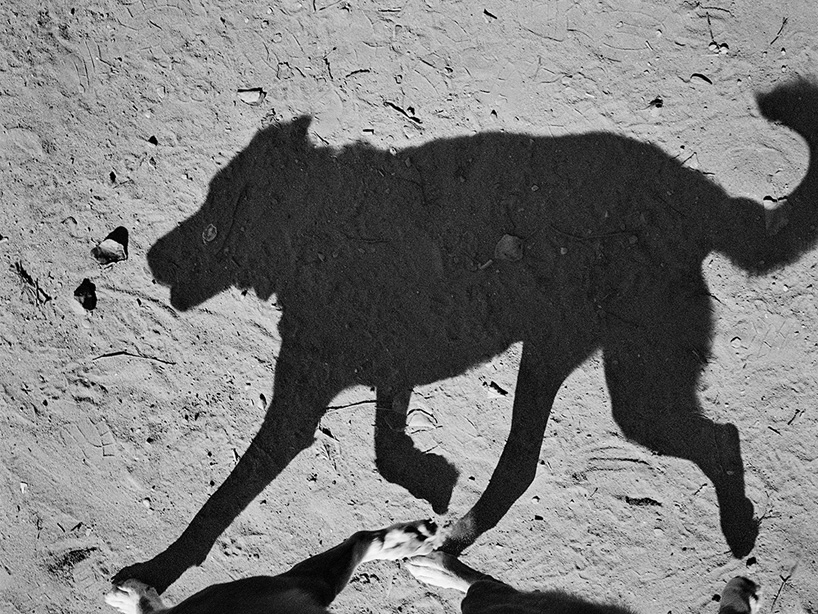 Mondo cane, Thomas Roma1280.jpg