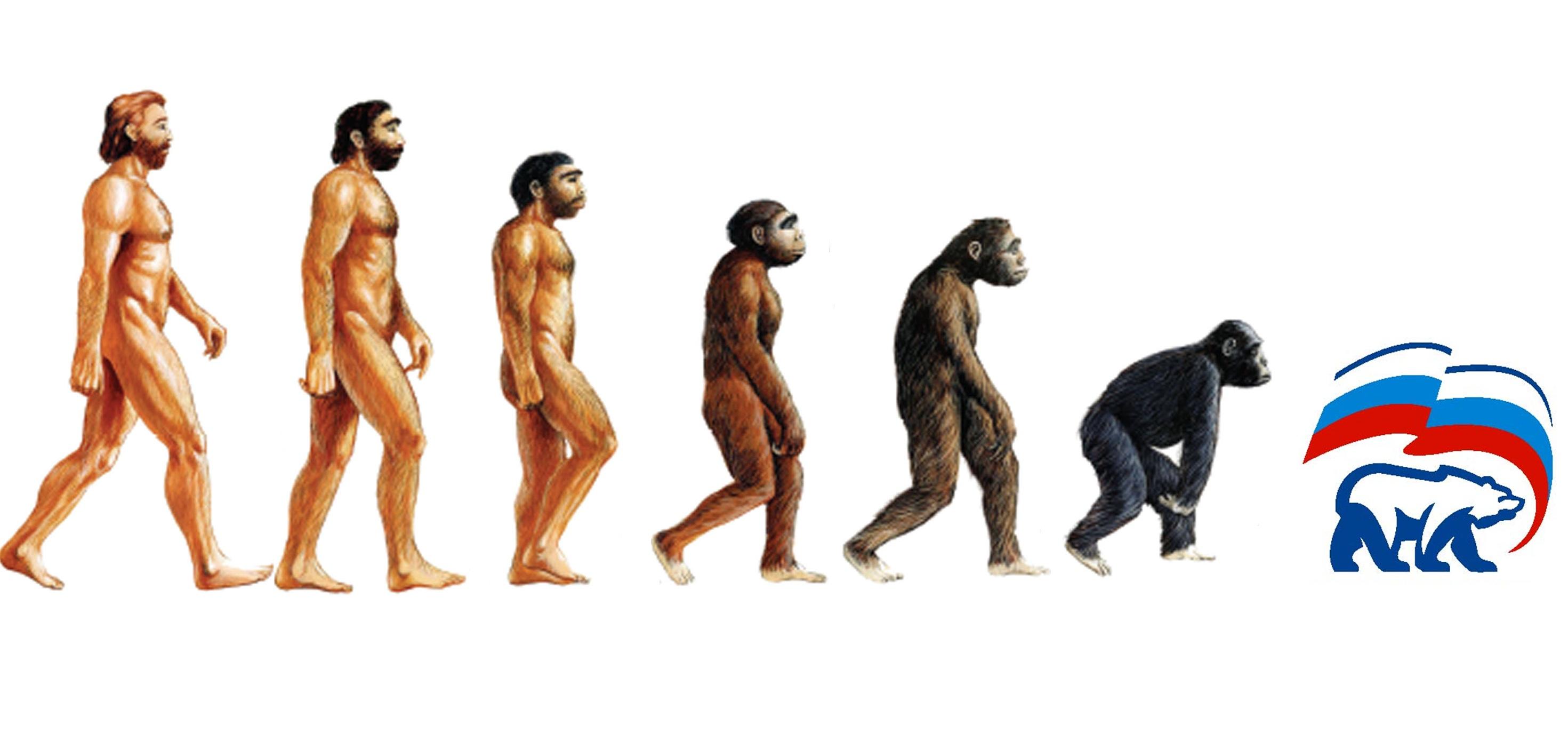 evolution_edros.jpg