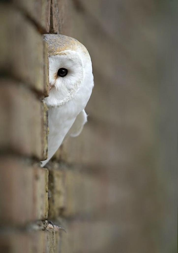 Удивительные фото птиц.