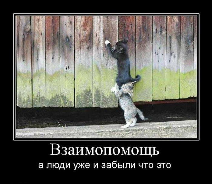 Лучшие демотиваторы 2011