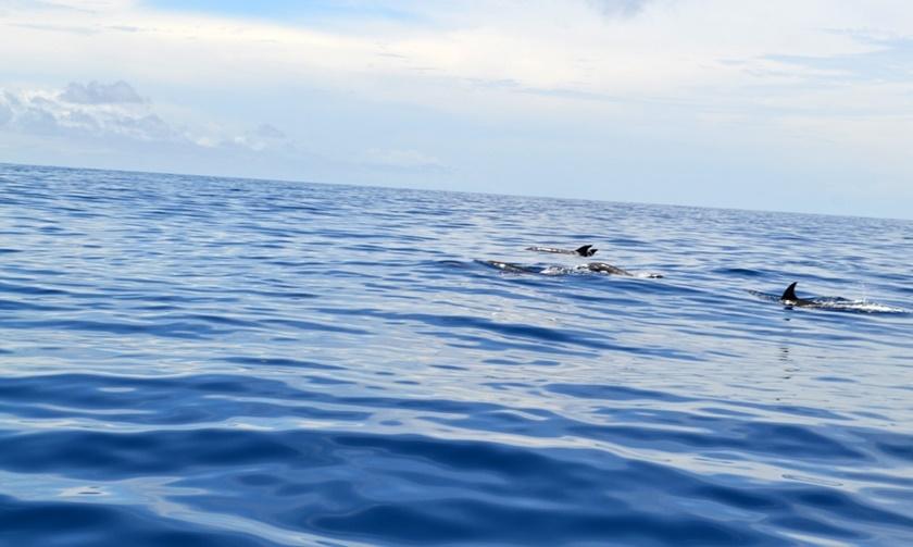 Дельфины у побережья Венесуэлы. Красивые фотографии 0 141a4e 88a79a0e orig