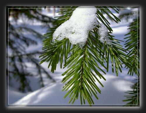 Зима торжествует