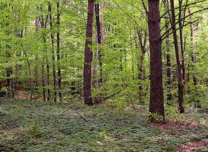 """Густой травяной покров в лесу заповедника """"Расточье"""""""
