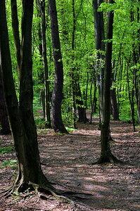"""Дубово-грабовый лес заповедника """"Расточье"""""""