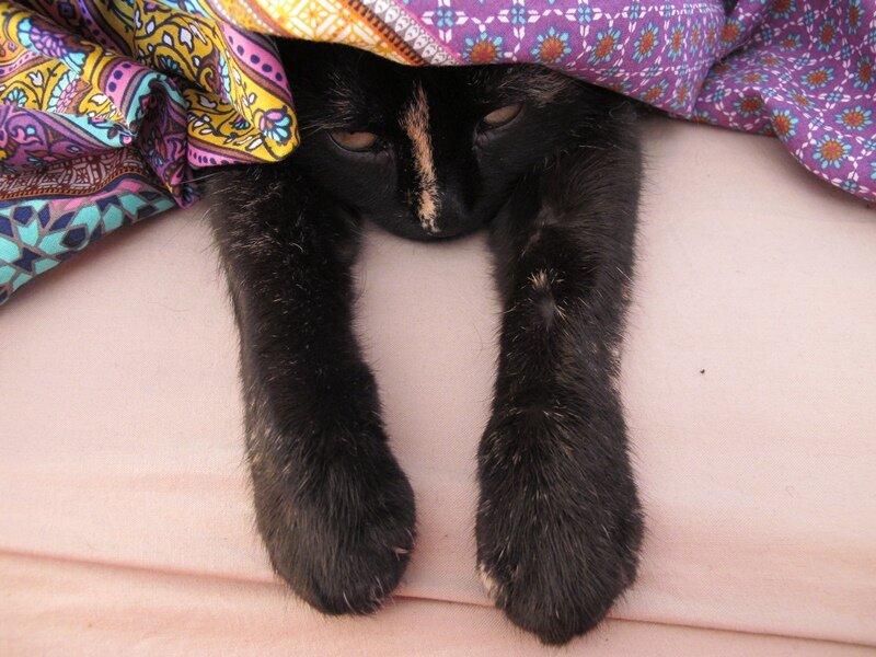 Как же бедной кошке поспать?