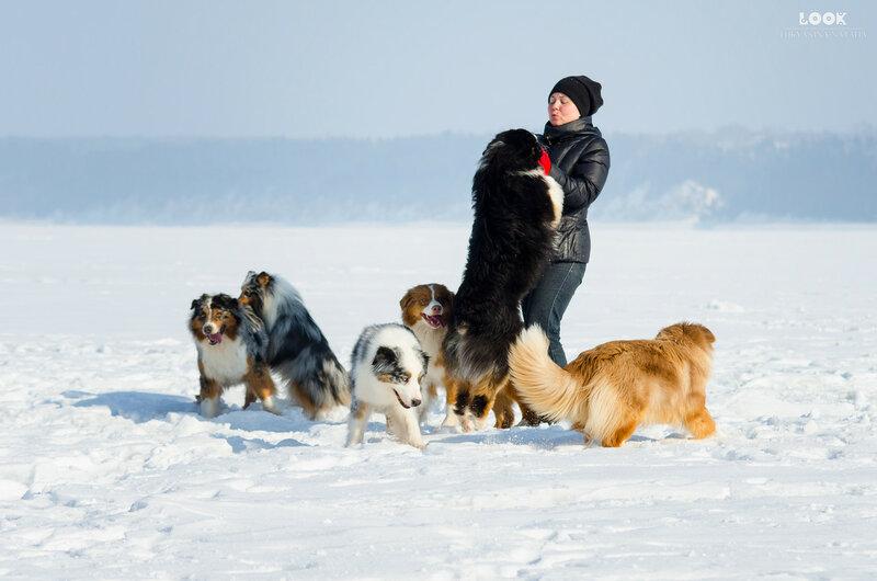 Мои собаки: Зена и Шива и их друзья весты - Страница 8 0_a83b8_70602e9b_XL