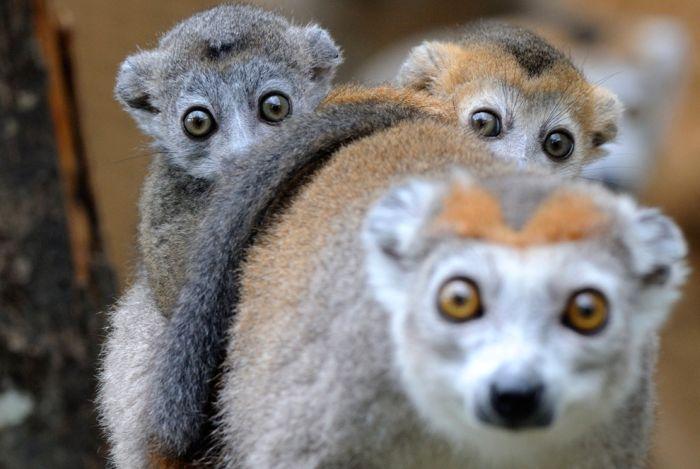 Лучшие фотографии животных в 2011г