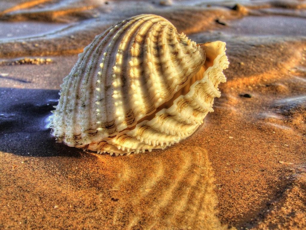 Морские раковины в фотографиях